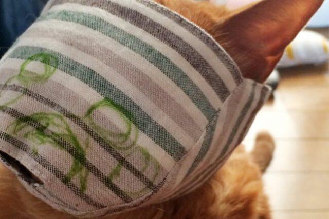 ネコの骨格位置マーキング