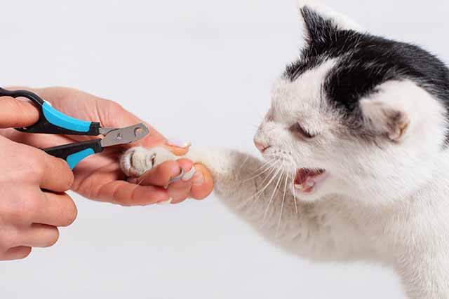 爪切りを嫌がる猫