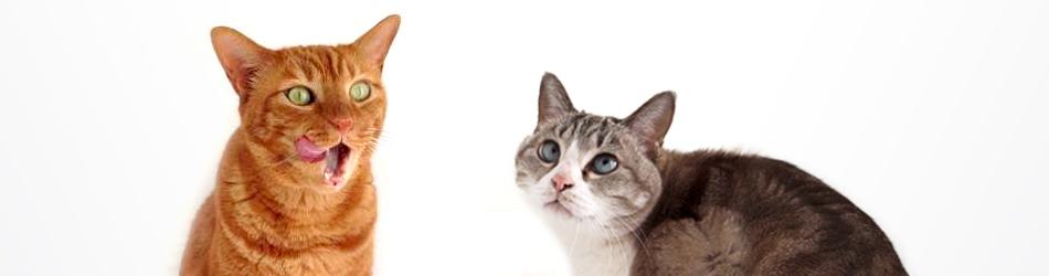 ネコ目線のモノづくりでネコの困ったを解決