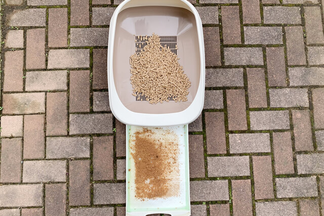 猫砂11日目の様子