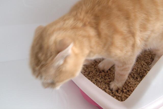 猫トイレの猫砂の飛び散り防止