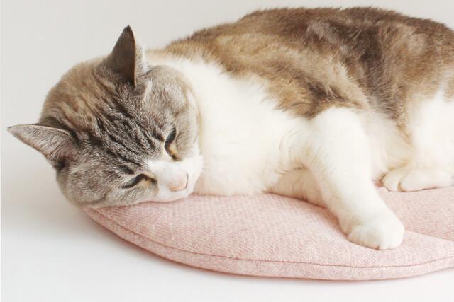 nekozukiぽかぽかマットPOCKETで眠るネコ