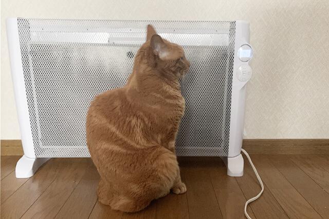 ヒーターで暖まる猫