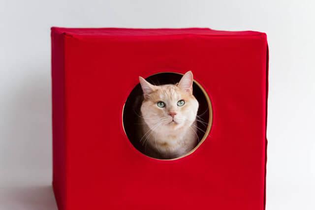 猫蔵の使い方