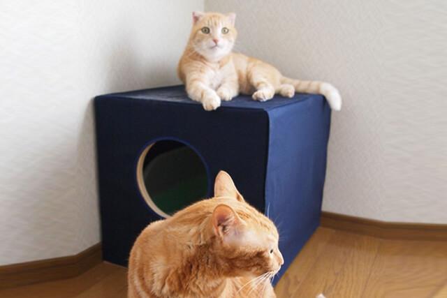 猫トイレ使用中のネコの様子