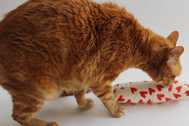 老猫特有の年寄り猫の毛割れ