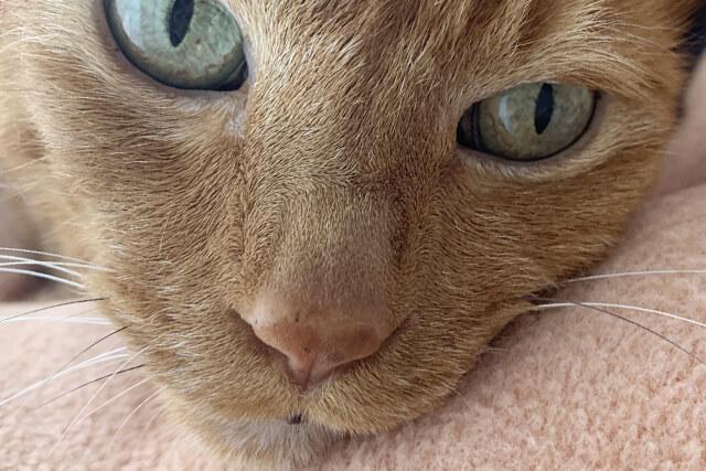 老猫特有の体の変化