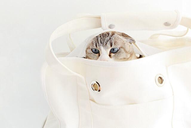 ネコの日トートキャリーバッグ