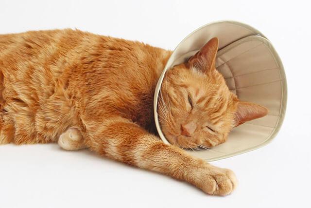 猫の身体に負担の少ないエリザベスカラー