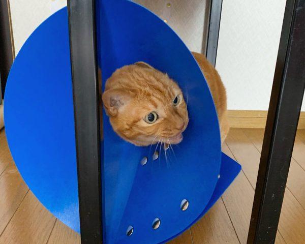 猫に負担の少ないエリザベスカラーは?比較実験