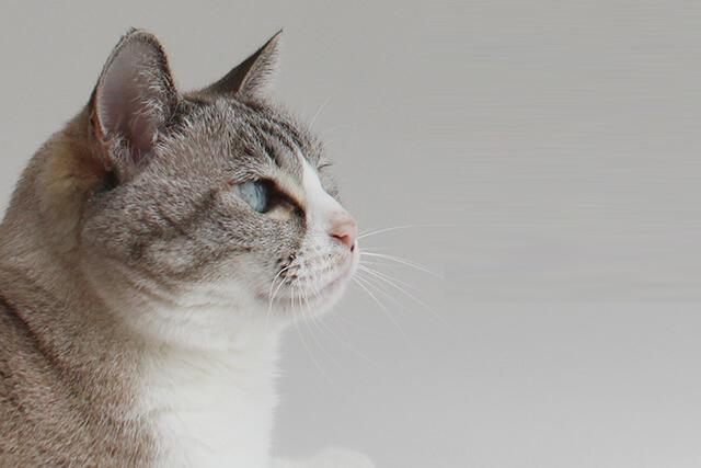 ネコさんの困りごと解決