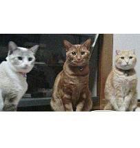 3匹の猫社員