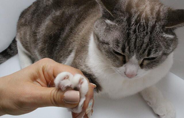 ネコの手を借りる