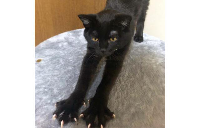 ネコさんの爪を見せてください!