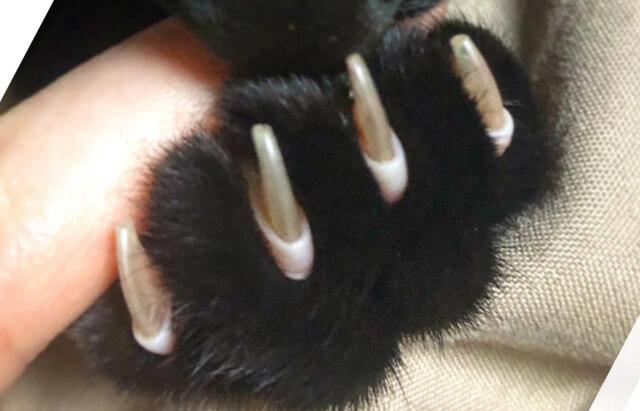 黒猫こんぶさん