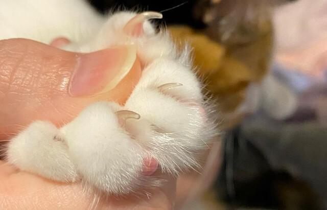 三毛猫ちまきさん