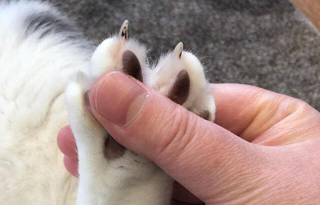 福くんの爪1