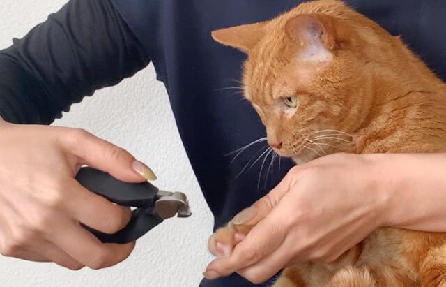 ネコの爪切り頻度・アンケート結果