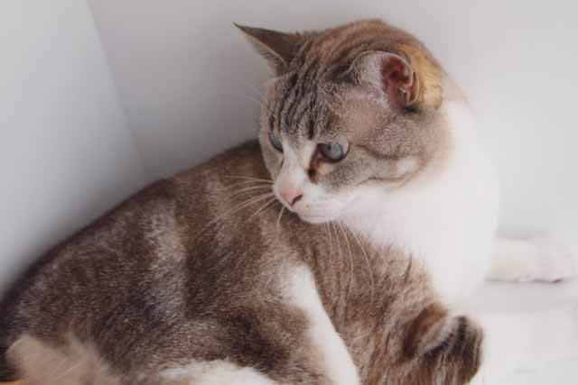 ネコは体温調整が苦手