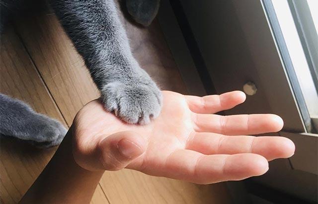 トトさんの手(クリームパン)