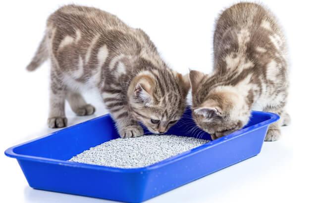 猫砂は食べ物か