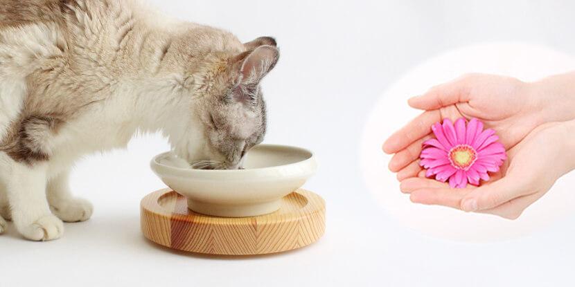 猫の食事をサポート