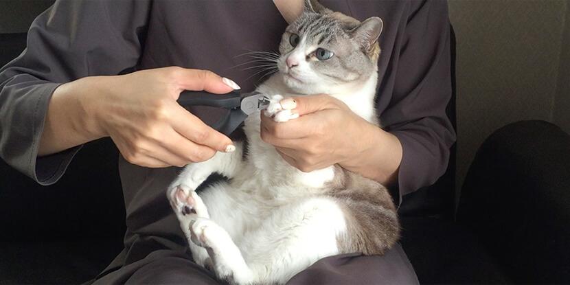 爪切りがすぐ済むから猫のストレス少ない