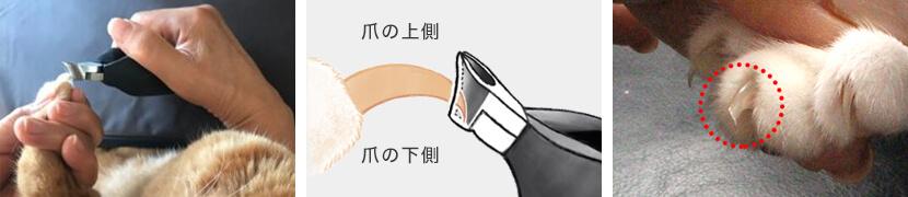猫の爪切り方法