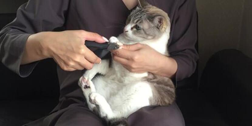 猫の爪切り怖くてできない問題を解決する「ねこずきなつめきり」