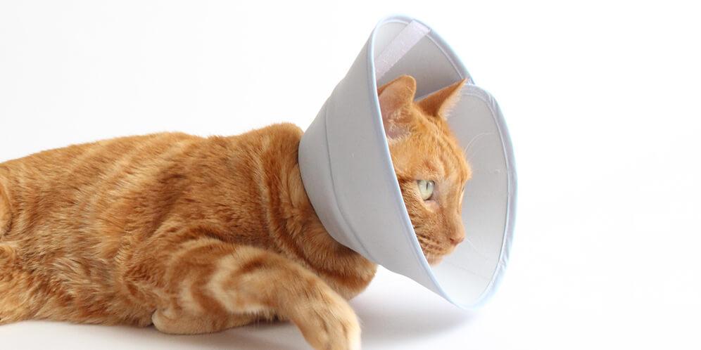 猫が自由に動けるエリザベスカラー