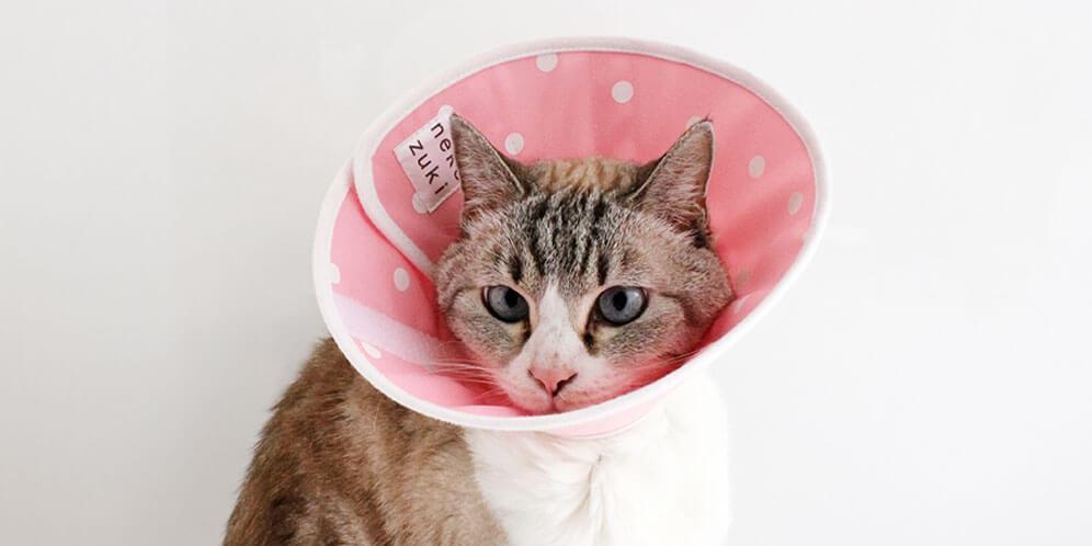フェザーカラー全面しんは猫の傷をしっかりガードするから留守中や夜間も安心
