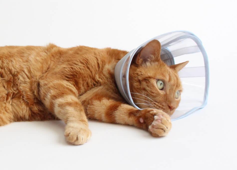 柔らかい透明な猫用エリザベスカラー