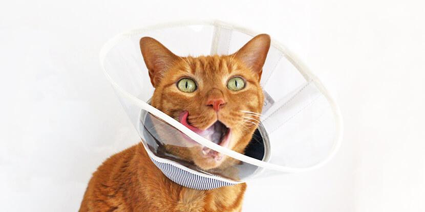 猫に負担のないエリザベスカラー
