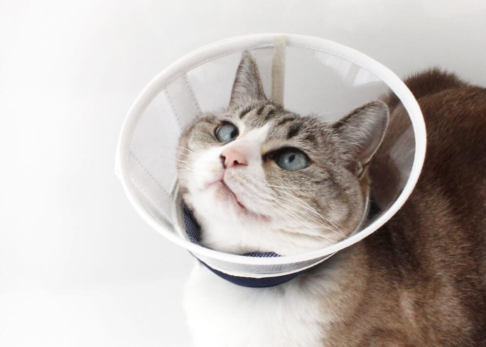 軽く柔らかい猫用エリザベスカラー