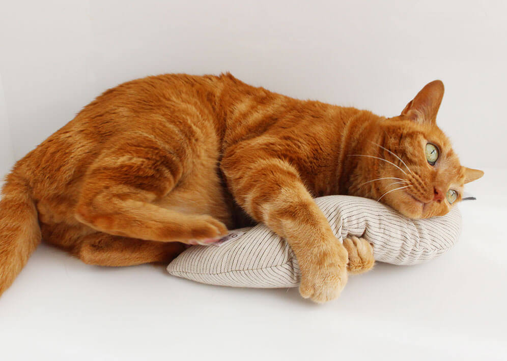猫のおもちゃ『みかづきけりけり』で運動不足解消