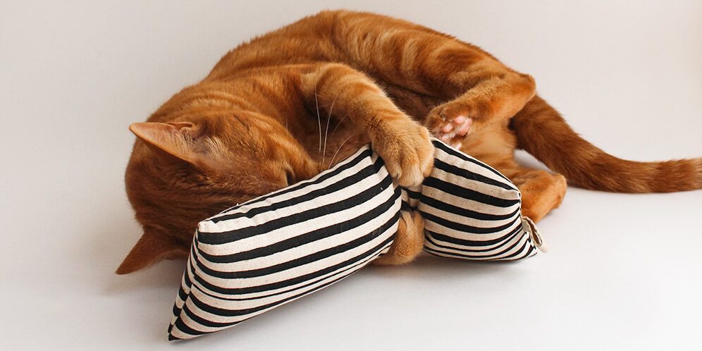 室内猫の運動不足を解消
