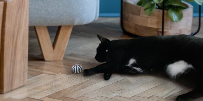 猫用の布製ボール