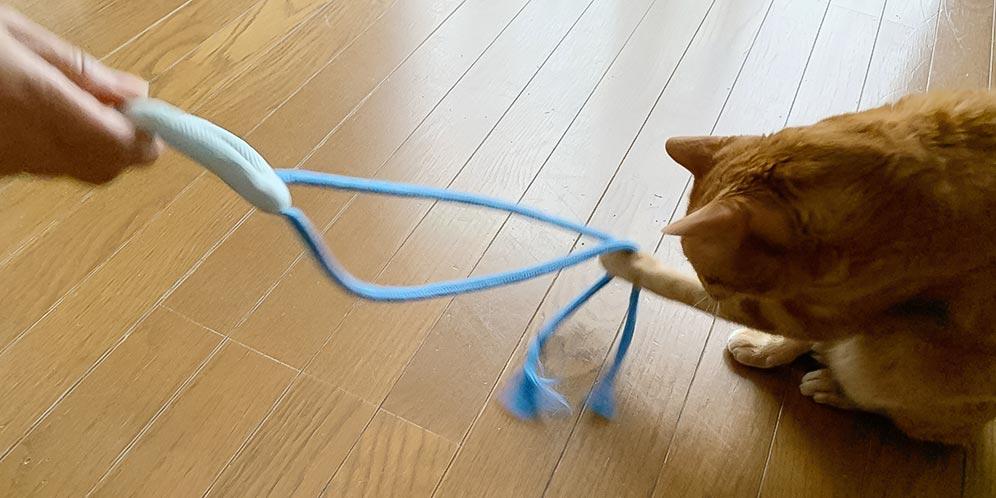 猫さん大喜びのクラゲのおもちゃ