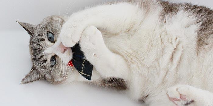 ねずみおもちゃをくわえる猫