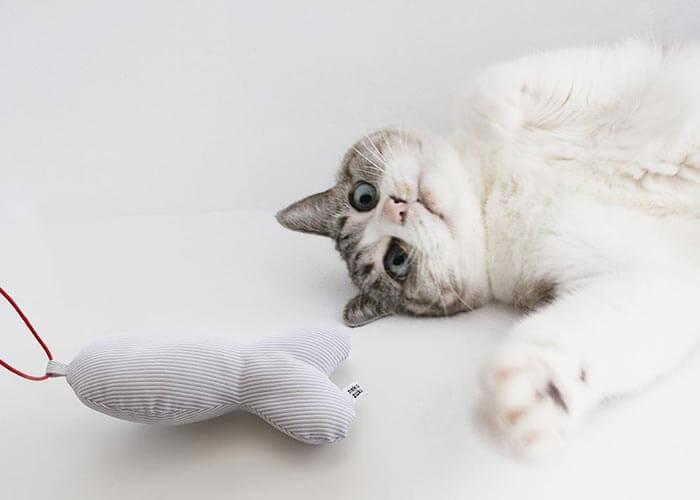 猫のおもちゃ『ねこずきさかな』で運動不足解消