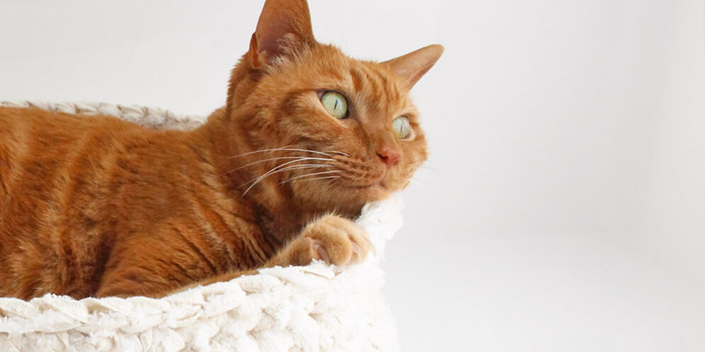 猫があごのせできるから快適