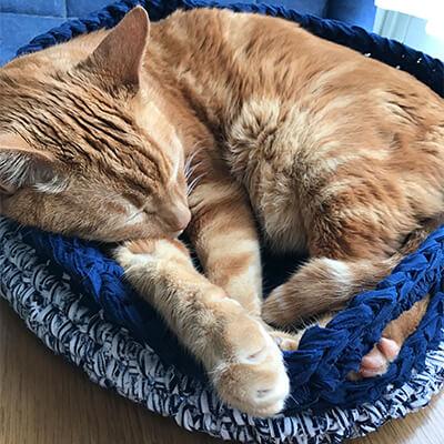 猫のストレスを極力なくすつくり