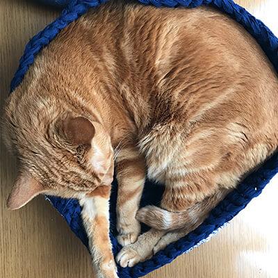 猫の動きに合わせて変形