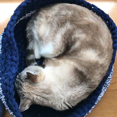 小柄な猫も丁度良いベッド