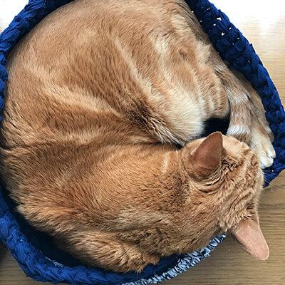 大柄猫も気持ちよいベッド