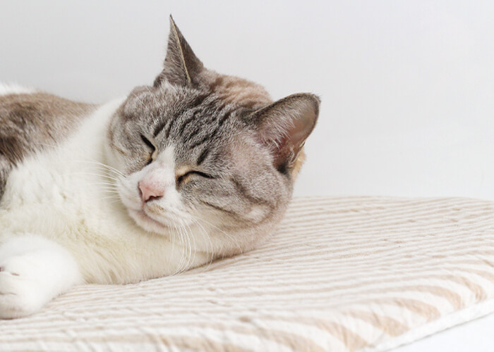 猫さんが快適に寛げる猫専用座布団おざぶ