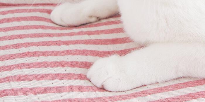 ふわふわクッションの猫用マット
