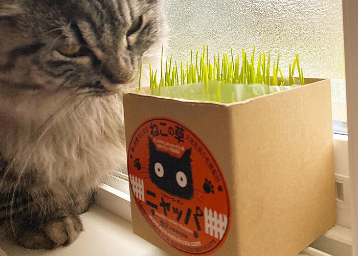 国産・有機栽培の猫草「ニャッパ」