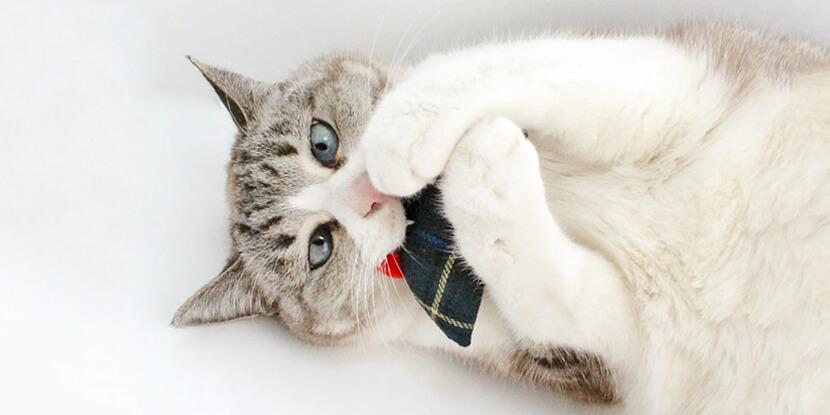 くわえて遊ぶねずみの猫おもちゃ