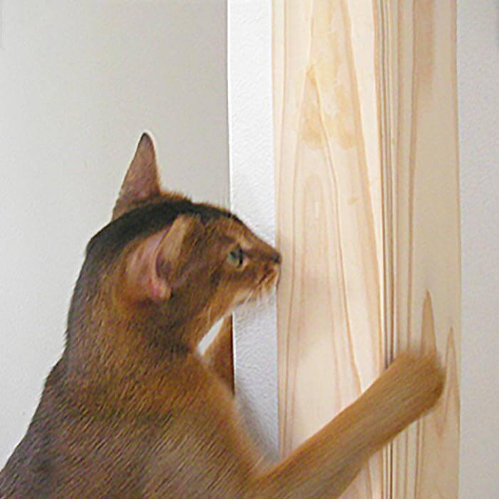 ネコさんの夏のおすすめグッズ:壁のコーナーガード